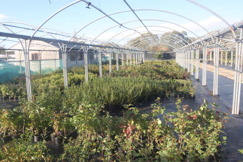 West Sussex Glasshouse Nursery To Let