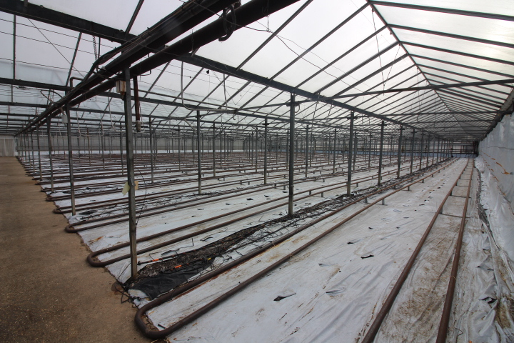 Organic Glasshouse Nursery For Sale