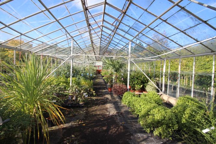 Wholesale Nursery To Let - Scotland