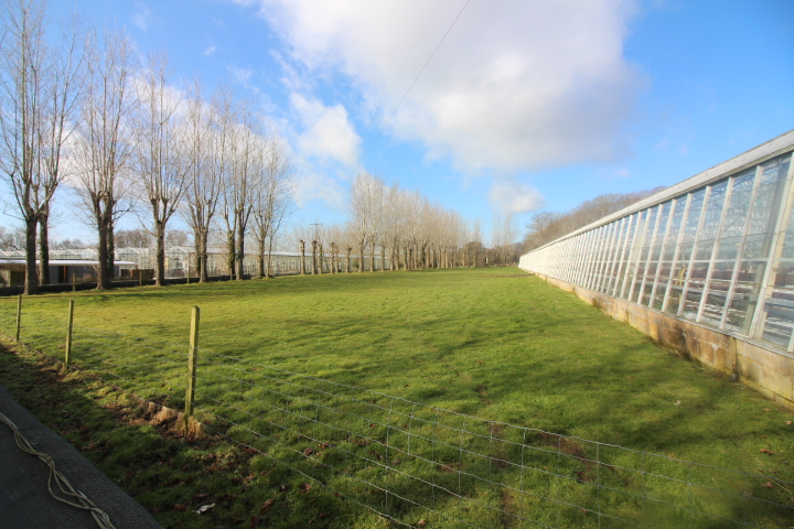 Isle-of-Wight-Glasshouse-Nursery-To-lat